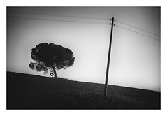 The Swing (Velaeda) Tags: italy tuscany blackandwhite landscape minimal pole swing tree wire