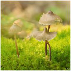 Douceur automnale !! (thierrymazel) Tags: champignons mushrooms bokeh pdc dof profondeur de champ automne autumn foret sousbois