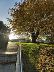 Autumn Challenge (UCD Staff Photography Club) Tags: ucd dublin ireland autumn staffphotoclub