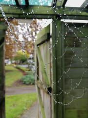 Autumn Challenge (UCD Staff Photography Club) Tags: ucd dublin ireland autumn staffphotoclub web spider raindrops dew