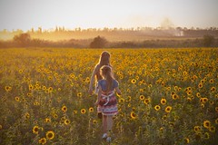 In the valley of sunflowers (adriana_foto) Tags: plant one person field land nature yellow beauty flower environment casual clothing grass flowering standing landscape leisure activity child tranquility day rear view outdoors hairstyle