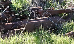Steel sleepers. (Runabout63) Tags: sleeper railway lochiel southaustralia