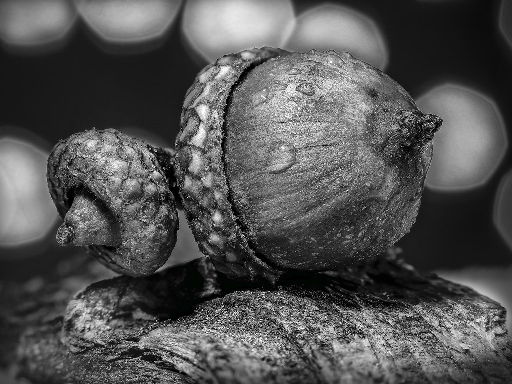 The World S Best Photos Of Acorns And White Flickr Hive Mind