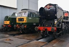 "British Railways Green Class 37/5, D6851 & Class 47/8, D1924 ""Crewe Diesel Depot"" (37190 ""Dalzell"") Tags: br britishrailways green twotonegreen ee englishelectric type3 growler tractor class37 class375 brush sulzer type4 duff spoon class47 class478 d6851 37667 37151 d1924 crewedieseldepot 47810 47655 47247 steamlocomotive kettle southernrailway sr 462 34046 braunton lsl locomotiveserviceslimited dieseldepot crewe"