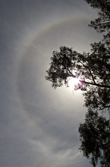 Icebow (Padmacara) Tags: sky tree shadowlight icebow g11 sun cloud