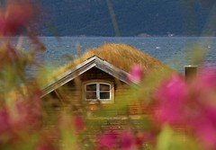 Hut at the fjord (annazelei) Tags: canon eos norway norge norvégia fjord nature natural hut house haus colorful colourful world naturaleza flickr paysage peaceful naturephotography beautiful north landscape flower pink blue wood grass fű természet outdoor travel travelling mood wind water scandinavia