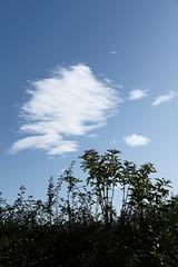 (datz) Tags: autumn trees northumberland fujifilm