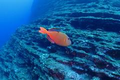 Plongée au Mexique (michel David photography) Tags: mexique plongée dive