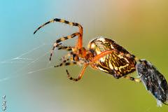 tasty lunch ... (N.Batkhurel) Tags: season summer forest insects closeup mongolia macro ngc nikon nikond5200 nikkor natur nikkor105mm spider
