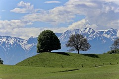Together is better than alone.... (Lara.C.) Tags: together thebeautyofnature nature landscape spring trees hiking swissmountains swissalps bernesealps mountains switzerland