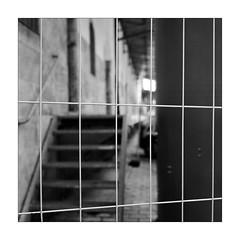 Fine Backdoor Fence (Thomas Listl) Tags: thomaslistl blackandwhite biancoenegro noiretblanc monochrome fence fencedfriday hff yashica yashicamat124g kodak trix kodaktrix lines bokeh tlr 6x6 square 120 mediumformat mediumformatfilm film filmphotography analog quelquesjoursàwürzburg av af urban