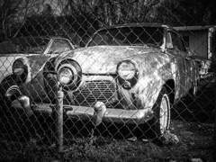 When you've got a bulletnose Studebaker... (lonestarbackroads) Tags: