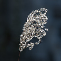 Sunlit Silhouette (nickinthegarden) Tags: abbotsfordbccanada