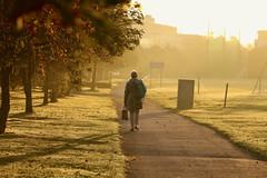 Autumn Challenge (UCD Staff Photography Club) Tags: ucd dublin ireland autumn staffphotoclub goldenlight longshadows mist walking belfield