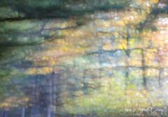 Morning Walk : October (Joan Gray) Tags: morningwalk october octobercolors riverwooddr willamettevalley oregonautumn