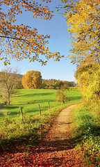 Gorgeous landscape panorama in autumn (decocentrum) Tags: landscape panorama autumn fall meadow nature idyllic idyll scenic scenery scene sun rural path trail track colorful colourful trees sky green blue yellow gold leaves leafs autumnal agriculture grass pasture trekking hiking recreation tranquil field flora forest wood panoramic view sunshine sunrays rays poster seasonal colors beautiful gorgeous germany hill