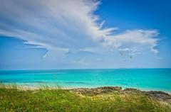 Summer memories - Cayo Santa Maria, Cuba (@magda627) Tags: cayosantamaria cuba ocean sea sand outdoors nature landscape light day summer birds sky beach sun flickr