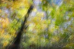 October Morning Abstract (Joan Gray) Tags: october morningwalk abs icm intentionalcameramovement oregon willamettevalley