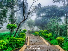 """Every pain gives a lesson, And every lessons changes a person """"unknown"""" . . . #bangalore #sobangalore #nandhihills #nature_uc #naturephotography #greenland #wanderlust #foggymorning #weekend #earlymorning #canon #canon_photography #streetphotographyindia (ps_avinash) Tags: naturephotography greenland namabengaluru naturalbeauty naturza sobangalore nandhihills trees minimalism pleasanthill amazing streetphotographyindia instagram igersbangalore minimalarchitecture igers natureuc bangalore canon canonphotography mistvision weekendvibes tbc foggymorning wanderlust awesomephotography greenery earlymorning weekend"""