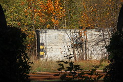Derelict building at freight yard , Czerwionka Dębieńsko train station 17.10.2019 (szogun000) Tags: czerwionkaleszczyny poland polska railroad railway rail pkp station czerwionkadębieńsko tracks yard building abandoned derelict ruined disused overgrown trees d29140 śląskie silesian górnyśląsk uppersilesia canon canoneos550d canonefs18135mmf3556is