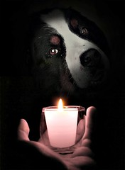 Like a candle in the wind (patrick.verstappen) Tags: profiles max love you kiss dog pet boy flickr facebook fantasy rêve ipernity ipiccy imagine inspiration inspirational image inkt photo picassa pinterest portrait patrick verstappen yahoo gingelom google grass goodmorning funny d5100 october autumn xxx expression experiment explore excercise english chien art sigma belgium barbie bélgica belgie black bw candle berner sennen bsd bsh candleinthewind hand