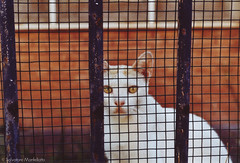 Cat behind grid (djsalvomanfo31) Tags: christabel filmphotography 35mm kodakfilm zenit122 retrostyle vintagestyle like90s 90sstyle analog italy sunset orange sky summer holydays nature filmisnotdead urban buildings grid cat wall red