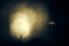 Lurking in the dark (micke.vmix) Tags: carlzeiss zeiss aposonnart2135 sonnar135f2zf d850 mushroom