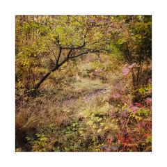 Off The Beaten Track (gerainte1) Tags: autumn colour leaves trees woodland woods film velvia50 hasselblad501