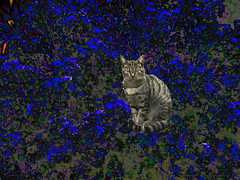 Of Flowers&Cats (fishmonger45) Tags: photoshop flowers cats abstract artdigital