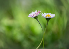 ...2014 (erligarai) Tags: canoneos6d loreak flores flowers spring green