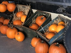Pumpkins, Pumpkins Everywhere! (AGSEM1976) Tags: flickr tags pumpkin sorghum crop harvest 2019 agsem socal vista ca 92083 local homegrown kids tractorshow fair trackortreat october fall autumn aesthetic show openhouse wagon agriculture california sandiego event shadows green orange sky nature outside fun red blue hay crate countryside gold life colors day light flowers people family garden familyfun sun plants