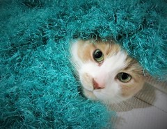 Peek-a-boo Kitty (goretti sobeit) Tags: cat animal cute hiding warm kitty feline cuddly pet