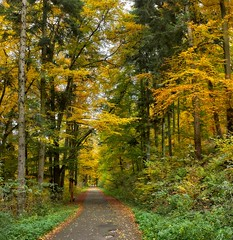path (Slávka K) Tags: path autumn trees forest colors fallen leaves grass gold perspective view landscape country slovakia composition 2019 moretrees sunnyday atmosphere stroll walking natur