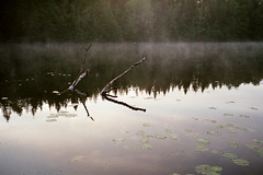 2+2 / 50/50 (Petri Karvonen) Tags: water lake branches tree reflections nature mist misty fog forest trees scenery scene landscape lakescape analog film fuji superia200 olympus af1 super expired compact birch dead outdoor grain surface evening