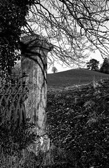 dream in the lost (Mano Green) Tags: railing pillar fence tree shadow light field cumbria england uk canon eos 300 40mm lens ilford delta 100 35mm film ilfosol s epson perfection v550 january winter 2017 black white countryside