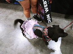 Excited LA Comic Con patron (ok2la) Tags: la comic con dog canine skirt dressed