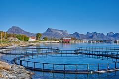 Korsnes, Nordland, Northern Norway (Petra Schneider photography) Tags: korsnes fishingvillage nordnorwegen nordland norge norway