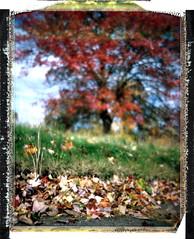 Metamerics (AristotelisM) Tags: polaroid fp100c film filmisnotdead filmart filmography