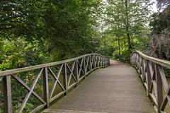 Birkenhead Park (Philip Brookes) Tags: bridge birkenhead park wirral tree merseyside