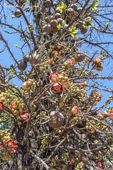 _DSC5089 2 (Arnaldo Lameira) Tags: árvore tree flores flowers