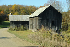 On The Bend (Diane Marshman) Tags: old barn buildings dark gray weathered wood siding barnboards boards metal tin roof windows door rural country setting scene fall autumn pa pennsylvania nature dirtroad road dirt trees colors field weeds