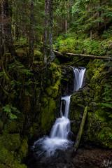 Lost Creek Falls (Joshua Johnston Photography) Tags: mounthoodnationalforest oregon pacificnorthwest pnw joshuajohnston sonya7iii sonyfe28mmf2 waterfall forest moss green nature