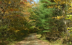 One Laner (Diane Marshman) Tags: fall ny state new york dirtroad dirt road one lane narrow autumn trees leaves pine fallen falling country rural setting