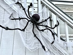 red eye, green eye (Cathy de Moll) Tags: halloween spider decoration web black white diagonal spooky