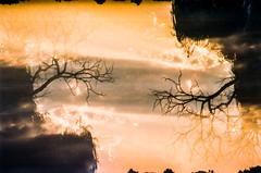 On how to become a mirror (lunacornata) Tags: kodak film filmisalive keepfilmalive 35mm analog analogue analogica analogico analoga analogo landscape nature naturescape sky sunrise sun sunset double doubleexpo