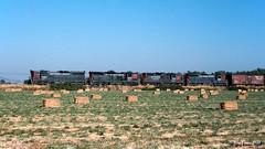 Valley Power (C.P. Kirkie) Tags: hallawell oregon usa southernpacific sp sporegondivision spbrooklynsubdivision southernpacificoregondivision sd9 gp9 emd freighttrain trains railroads railway willamettevalley albany