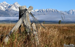 Never climb a barbed wire fence naked (Shannon Rose O'Shea) Tags: shannonroseoshea shannonosheawildlifephotography shannonoshea shannon barbedwirefence barbedwire fence grass mountains clouds fencepost tree mormonrow grandtetons grandtetonnationalpark moose wyoming snowcapped snow bluesky outdoors outdoor outside colorful colourful colors colours flickr wwwflickrcomphotosshannonroseoshea smugmug art photo photography photograph nature landscape girlphotographer womanphotographer femalephotographer shootlikeagirl shootwithacamera throughherlens camera canon canoneos80d canon80d eos80d eos 80d canonefs1855mm canongirl justagirlwithacamera naturephotographer happyfencefriday hff ngc