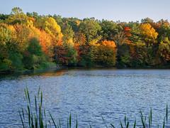 Nosenzo Pond_2593 (smack53) Tags: autumn fall autumncolors fallseason autumnseason smack53 trees water newjersey pond nikon fallcolors foliage coolpix westmilford p7000 nikonp7000 nikoncoolpixp7000