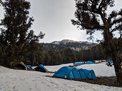 Base Camp (elev. 11,000 ft) ([Kevin] [McCarthy]) Tags: uttarakhand india trek hiking nature trees mountains himalayan snow snowcaps elevation high tents camping blue sleep nap forest evergreen