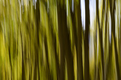 Abstract (Bob Nastasi) Tags: aspengrove aspen abstract colorado trees z7 bobnastasi